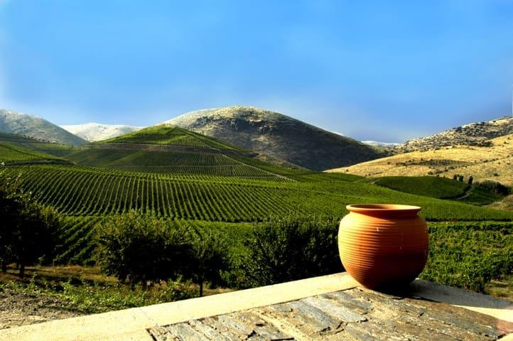Vivre dans le centre du Portugal dans les vignobles du Dao